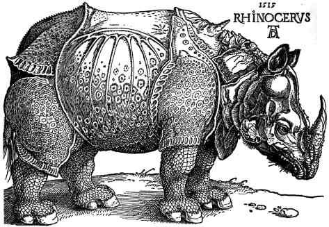 Albrecht Dürer - Rinoceronte